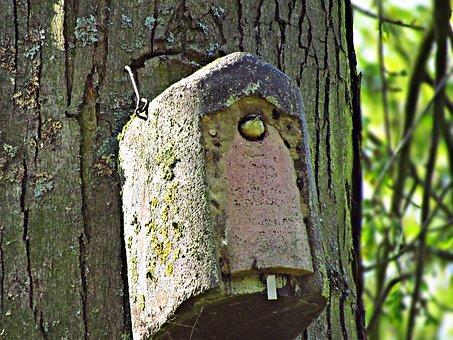 Bird, Tree, Beak, Nature, Little Bird, Ornithology