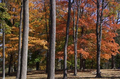 Fall, Foliage, Trees, Autumn, Nature, Orange, Season