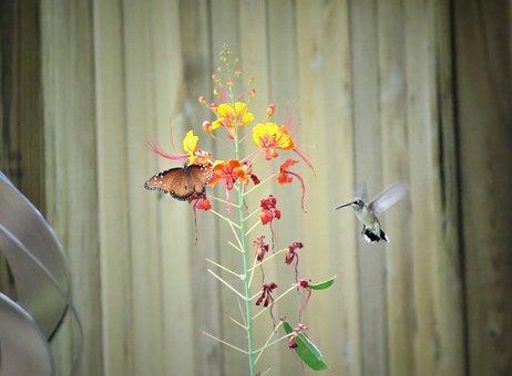 Flower, Butterfly, Hummingbird, Orange, Yellow, Garden