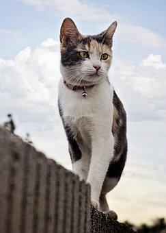 Cat, Wall, Sky, Cute, Animal, Pet, Domestic, Fur, Young