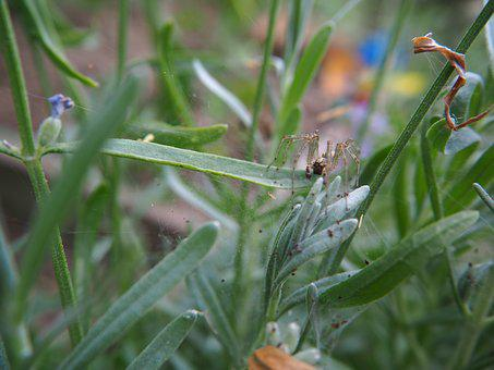 Spider, Garden, Animal, Cobweb, Nature, Close, Network