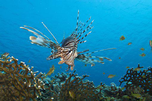 Fish, Underwater, Marine Life, Sea, Coral, Water
