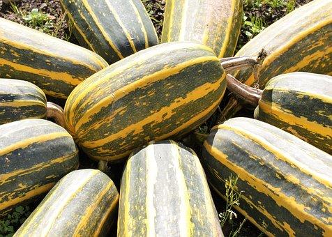 Marrows, Marrow, Veg, Vegetable, Food, Fresh