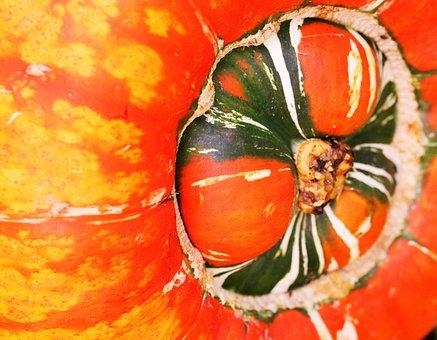 Gourd, Harvest, Autumn, Fall, Orange, Vegetable