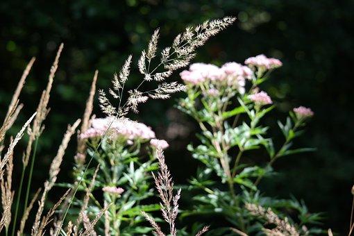 Grass, Meadow, Flower, Nature, Green, Summer Meadow
