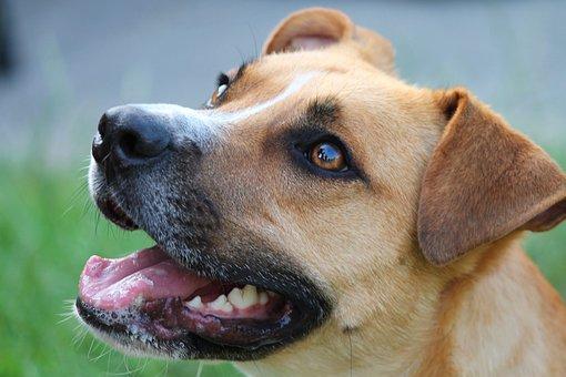 Dog, Hybrid, Portrait, Pet, Animal, Young Dog