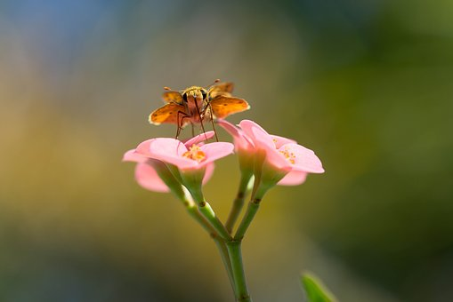 Moth, Macro, Pink, Animal, Nature, Insect, Butterfly