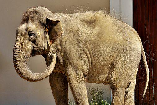 Elephant, Proboscis, Sand, High Throw, Pachyderm