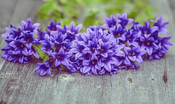 Flowers, Purple, Wood, Plank, Fresh, Nature, Plant