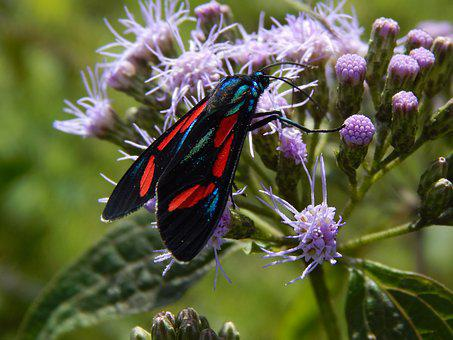 Butterfly, Wild Flower, Lepidopteran, Sucking