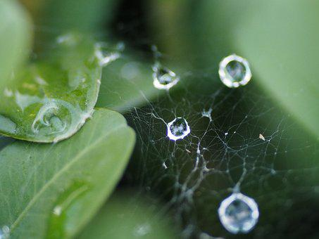 Cobweb, Dewdrop, Network, Dew, Close, Drip, Nature