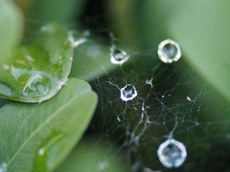 Cobweb, Dewdrop, Network, Dew, Close, Drip, Nature