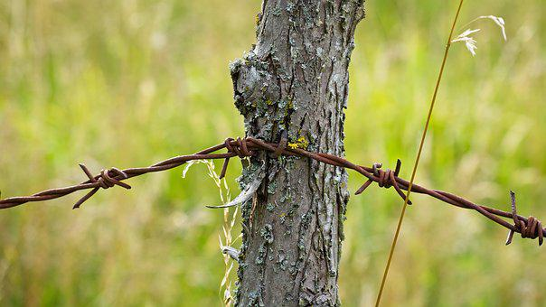 Barbed Wire, Wire, Metal, Demarcation, Close, Limit