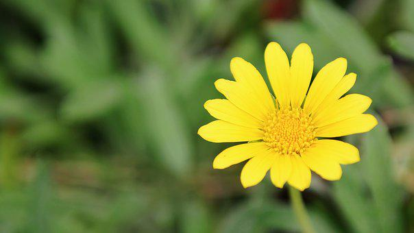 Flower, Daisy, Yellow, Nature, Spring, White, Floral