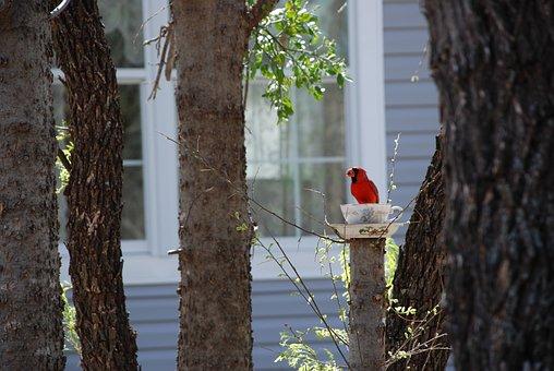 Cardinal, Bird, Teacup, Trees, Red, Nature, Animal