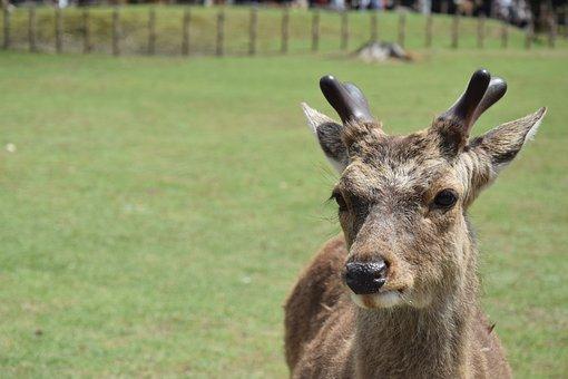 Roe Deer, Antler, Animal, Wild, Hirsch, Atmospheric
