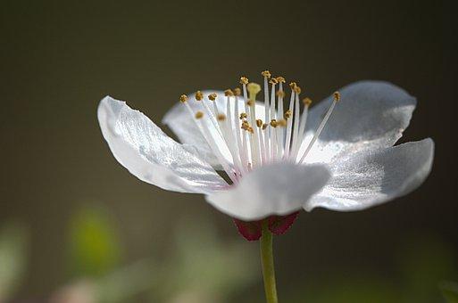 Flower, Nature, Plant, Spring, Beauty, Flora