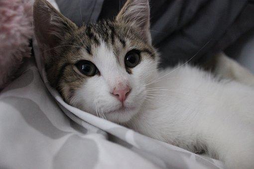 Cat, Cute, Fart, Animal, White Cat, Petit, Hair, Feline