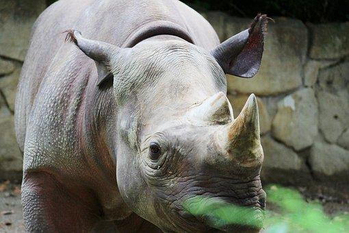 Sai, Animal, Zoo, Corner, Kenya, The Dinosaurs, Popular