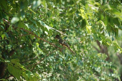 Nuthatch, Green, Wild, Bird, Nature, Animal, Natural