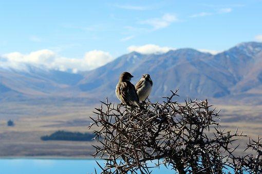Birds, Nature, Outlook, Mountains