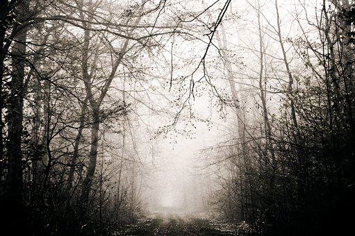 Forest, Fog, Trees, Emotions, Fear, Loneliness, Nature