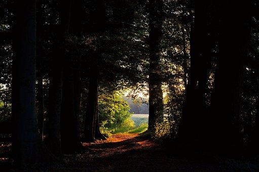 Forest Glade, Forest, Green, Nature, Glade, Landscape