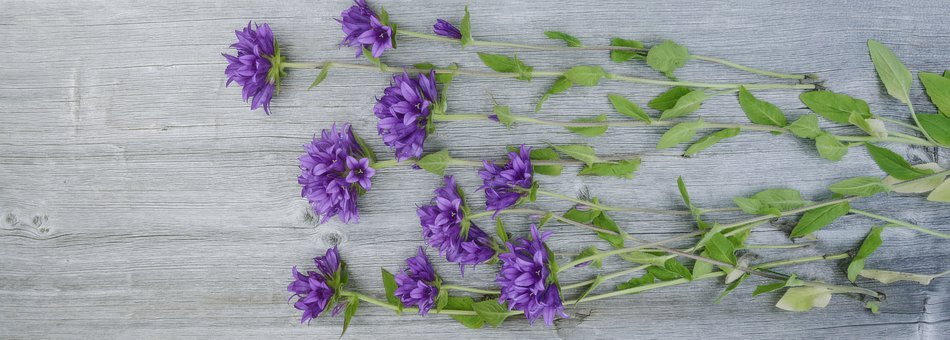 Flowers, Purple, Wood, Plank, Fresh, Nature, Plant