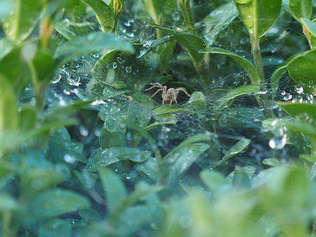 Spider, Cobweb, Nature, Close, Insect, Network, Animal