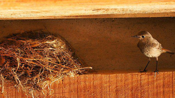 Nature, Birds, Nest, Bird