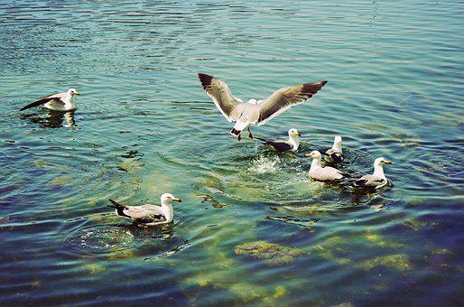 Playground, Bird, Seagulls