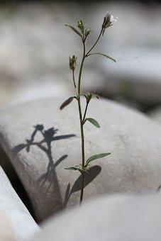 Rest, Fengshui, Balanced, Force, Nature, Stones, Plant