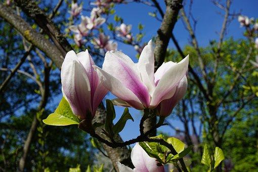 Flowers, Spring, Flowering Trees
