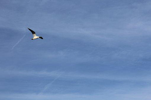 Seagull, Blue, Sky, Summer