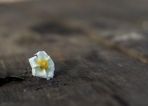 Flower, Decoration, Plant, Green, Wood, Table