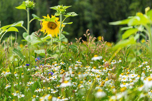 Nature, Summer, Flower, Blossom, Bloom, Summer Plant