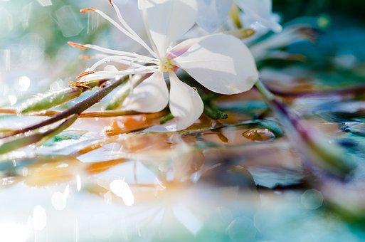 Blossom, Bloom, Plant, Flower, Macro, Close, White
