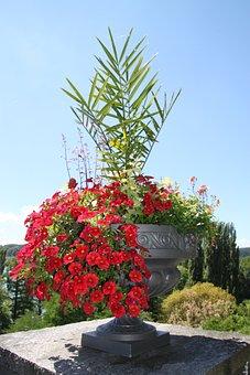Flowers, Pot, Pots, Nature, Blossom, Bloom, Green