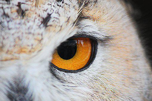 Fauna, Buho, Bird, Birds, Feathers, Peak, Animal, Ave
