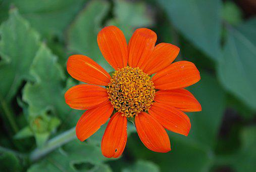 Orange Flower, Flower, Orange, Spring, Green, Plant