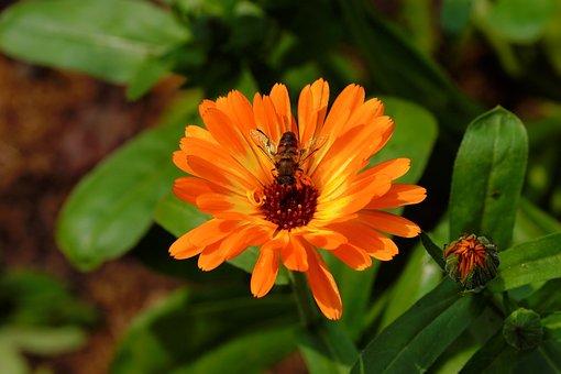 Blossom, Bloom, Orange, Tender, Orange Flower, Plant