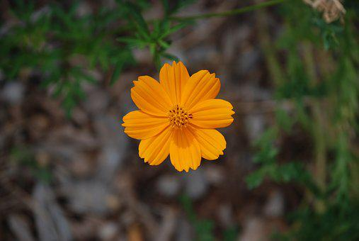 Orange Flower, Flower, Orange, Yellow, Spring, Green
