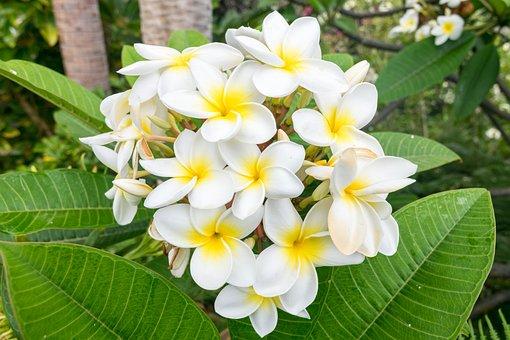 Flower, Shrub, Nature, Garden, Plant, Floral, Blossom