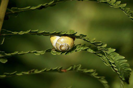 Snails, Reptiles, Mollusk, Shell, Slimy, Land Snail