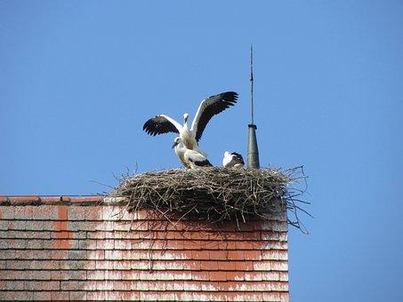Stork, Storchennest, Rattle Stork, Nest, Storks, Bird