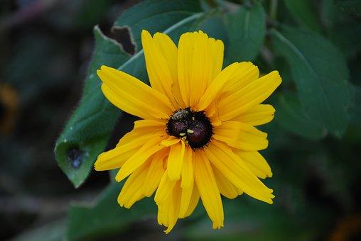 Sunflower, Yellow Flower, Yellow, Nature, Summer, Sun