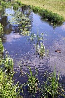 River, Torrent, Water, Green, Nature, Grass