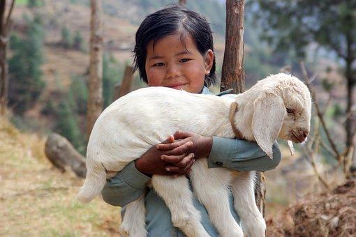 Nepal, Lamb, Sherpa, Trek, Girl, Child, Local People