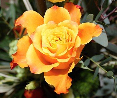 Flower, Orange, Yellow, Orange Flowers, Blossom, Bloom