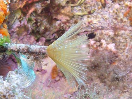 Underwater, Diving, Water, Ocean, Sea, Deep Sea, Coral